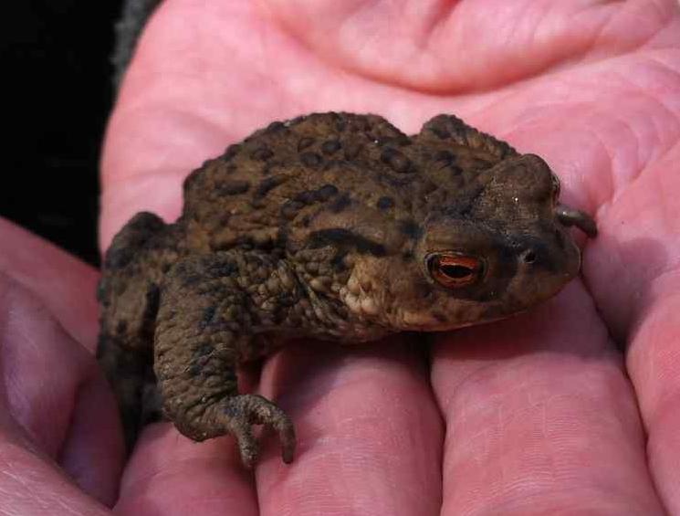 Meet a toad